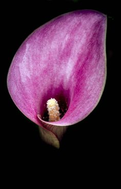 Perfect Bloom by Shannon Kunkle on 500px
