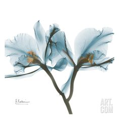 Orchids in Blue, by Albert Koetsier