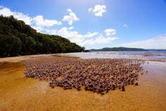 Linda Huynh   Hawkesbury River, NSW  Just a small gathering of crabs.