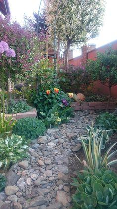Stepping Stones, Sidewalk, Outdoor Decor, Plants, Walkway, Flora, Plant, Walkways, Planting