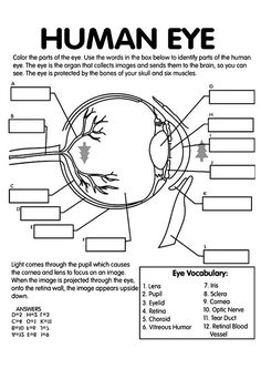 Anatomy Coloring Sheets free anatomy coloring pages anatomy coloring book eye Anatomy Coloring Sheets. Here is Anatomy Coloring Sheets for you. Anatomy Coloring Sheets human anatomy coloring pages sachunterricht herz. Anatomy Co. Anatomy Coloring Book, Coloring Books, Coloring Pages, Coloring Sheets, Free Coloring, Science Biology, Life Science, Forensic Science, Teaching Biology