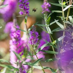 How to create a wildlife bog garden