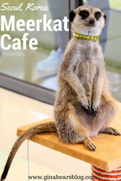 Seoul's Unique Cafes: The Meerkat Cafe in Hongdae http://ginabearsblog.com/2017/05/meerkat-cafe-hongdae/