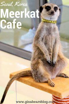 Seoul's Unique Cafes: The Meerkat Cafe in Hongdae http://ginabearsblog.com/2017/05/meerkat-cafe-hongdae/