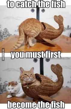 How to Capture a Fish Cute Animal Memes, Funny Animal Quotes, Animal Jokes, Cute Funny Animals, Cute Baby Animals, Funny Sayings, Cat Quotes, Animal Captions, Funny Cat Memes