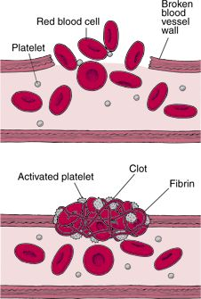 blood clotting (basics)