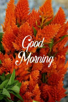 Beautiful good morning images with flowers Good Morning Flowers Quotes, Good Morning Beautiful Pictures, Good Morning Inspirational Quotes, Good Morning Picture, Good Morning Love, Morning Pictures, Morning Quotes, Beautiful Gif, Beautiful Scenery