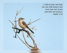 From Daily Scripture Project by artist Dawn Currie -   I call on you, my God, for you will answer me; turn your ear to me and hear my prayer. Psalm 17:6   Photograph of Florida's state bird - the Northern Mockingbird singing in the morning light. Image captured in Wickham Park in Melbourne Florida. Featured on Fine Art America: Beauty, Christian Art and Photography, Images That Excite You, Wildlife, and Women Photographers. #DailyScripture #Inspiration #Christian