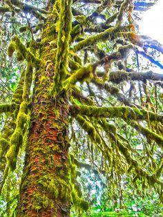 Hoh Rainforest - Washington State