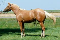 seriously secure aqha stallion - Google Search