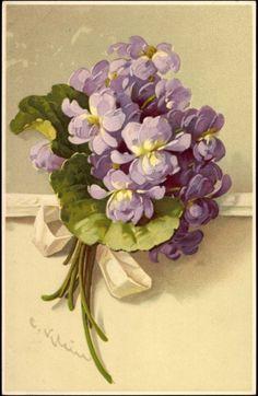 Vintage violets by Catherine Klein