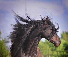 Wind of heaven blows between horses ears...
