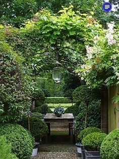 Loose plantings surrounded by a boxwood hedge is such a clic ... on