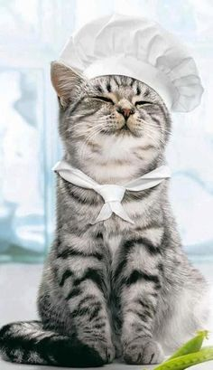 """Mmm-yes, tonight's menu consists of tuna tartare, catnip salad and cottage cheese. May I start the table off with saucers of milk, hmmm?"""