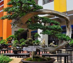 Modern Bonsai... Simply INCREDIBLE!!!