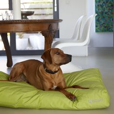 MiaCara dog cushion LUVIO lime