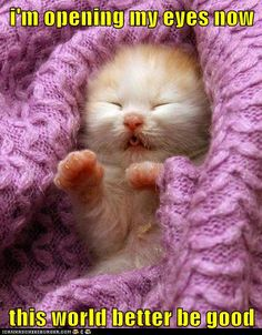 OMG adorable kitty in a beautiful hand knit purple blankie.... Can this picture get any better