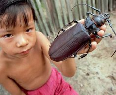 Titanus giganteus - world's largest beetle.... 16 cm long..........  Holy shit