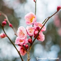 It is only with the heart that one can see rightly; what is essential is invisible to the eye ~ Antoine de Saint-Exupéry Photo@8270chihaya