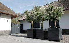 Grote houten bakken in zwarte kleur verdelen parkeergedeelte en wandel/fietspaden van elkaar. De wintergroene olijven worden 's avonds aangelicht door de grondspots in de bakken. De hoge poort naar de achtertuin is in dezelfde kleur geschilderd als de bakken.