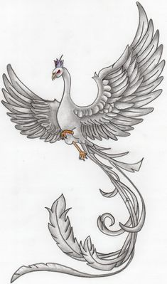 part of my phoenix drawings...