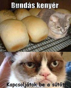 Cute Funny Animals, Funny Cute, Funny Fails, Funny Jokes, Grumpy Cat Humor, Haha, Funny Pictures, Kitty, Pets
