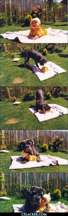 THIS is why I want a big dog. I mean, Come on! @Rachel Arrington