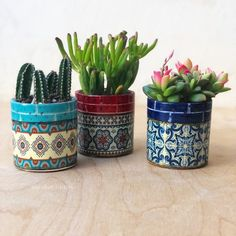 Set of Three Succulents or Cactus in Colorful Ceramic Pots, Perfect Hostess Gift, Tabletop Accents! Available with or without plants Succulent Gifts, Succulent Wreath, Suculentas Diy, Painted Plant Pots, Painted Vases, Ceramic Pots, Cactus Ceramic, Sola Flowers, Succulents In Containers