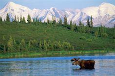 Anchorage to Denali National Park | Freiheit pur: mit dem Mietwagen durch die USA – Die etwas andere USA ...