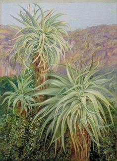 Aloes and Plumbago near Grahamstown, South Africa by Marianne North 1882