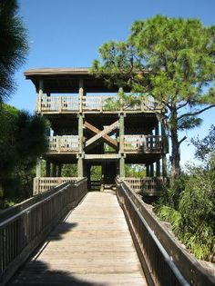 the observation tower at Wall Springs Park, Palm Harbor