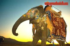 Best travel deals on Rajasthan vacation package, Rajasthan holiday packages at lowest price by No.1 tour operators. For more information visit http://www.myvacationsindia.com/Rajasthan/index.html