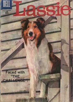 Lassie 41