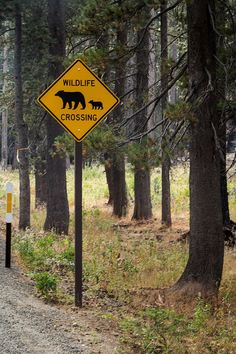 Wildlife crossing / Yosemite National Park
