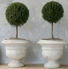 Antique French stone planters and standard topiary (lollipops) The Paris Apartment | Boutique