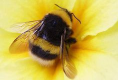 captured a bee on flower, personal pic of agnes lawver krause
