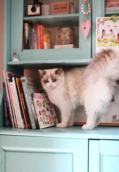 This cat would look good in my house I think