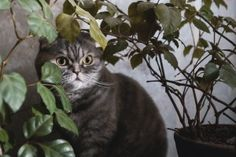 Poisonous Plants for Cats: Preventing a Botanical Cat-Astrophe!