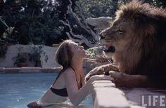 Série de fotos surpreendente mostra a rotina da família que viveu com um leão de verdade nos anos 70