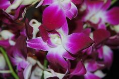 Fresh Flowers – Purple Dendrobium Orchids - See more at: http://grocery.florenttb.com/grocery-gourmet-food/fresh-flowers-live-indoor-plants/fresh-flowers-purple-dendrobium-orchids-com/#image