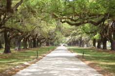 Road lined with Oaks in the low country  #ridecolorfully, #katespadeny , #vespa