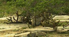 Florestal Noticias: Pesquisadores fundam Sociedade Científica do Semiá...
