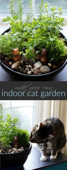 How to Make Your Own DIY Indoor Cat Garden (ad) Keep your cats safe by eliminating plants and flowers that are toxic to them with plants that are safe if they decide to nibble on them.  pets, cats, gardening, diy, safety