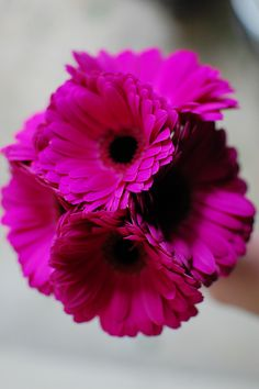 Dark Pink Gerberas for the other Bridesmaids