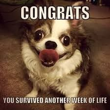 Image result for chihuahua funny meme