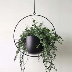Hanging Plants Outdoor, Metal Hanging Planters, Hanging Flower Pots, Modern Planters, Indoor Planters, Indoor Outdoor, Garden Modern, Hanging Plant Wall, Succulent Planters