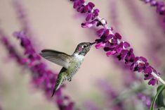 ::::::: hummingbird