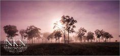 Domain Parked With VentraIP Australia Country Roads, Australia, Landscape, Park, Flowers, Plants, Image, Parks, Planters