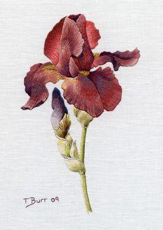 Embroidery Kit:  Iris Spartan