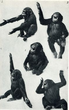 Amazing Images from PicsList.com - vintage monkeys chimpanzee